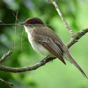 Photo of a bird making a nest