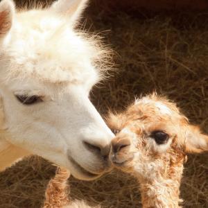 Mom Greets Newborn
