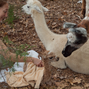 Atticus Checks Out Newborn