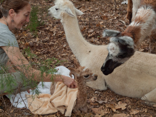 Atticus Checks Out Newborn