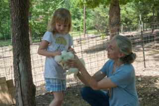 Chicken handling in Critter Class at Lake Lucerne Resort and Ranch